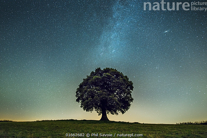 English oak tree (Quercus robur) under stars of the Milk Way, Brecon Beacons National Park, International Dark Sky Preserve, Monmouthshire, Wales, UK  ,  Plant,Vascular plant,Flowering plant,Rosid,Oak,Pedunculate oak,Plantae,Plant,Tracheophyta,Vascular plant,Magnoliopsida,Flowering plant,Angiosperm,Spermatophyte,Spermatophytina,Angiospermae,Fagales,Rosid,Dicot,Dicotyledon,Rosanae,Fagaceae,Quercus,Oak,Oak tree,Quercus robur,Pedunculate oak,English oak tree,French oak,Quercus pedunculata,Quercus longaeva,Capturing An Image,Photographing,Europe,Western Europe,UK,Great Britain,Wales,Photography,Tree,Outer Space,The Universe,Galaxy,Galaxies,Sky,Night,Monmouthshire,Astrophotography,Milkyway,night sky,Brecon Beacons National Park,Tree,Trees  ,  Phil Savoie