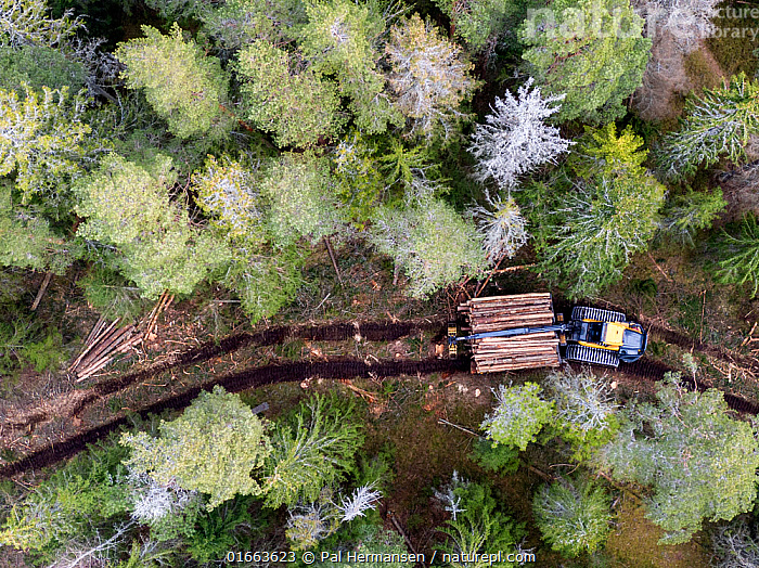 Logging operations in Spruce forest with harvester and logs, aerial view. Ski, Akershus, Norway. March 2020.  ,  Plant,Vascular plant,Conifer,Spruce tree,Plantae,Plant,Tracheophyta,Vascular plant,Pinopsida,Conifer,Gymnosperm,Spermatophyte,Pinophyta,Coniferophyta,Coniferae,Spermatophytina,Gymnospermae,Pinales,Pinaceae,Picea,Spruce tree,Spruce,Destruction,Europe,Northern Europe,North Europe,Nordic Countries,Scandinavia,Norway,Aerial View,High Angle View,Log,Logs,Environment,Environmental Issues,Environmental Damage,Deforestation,Forestry,Natural Resources,Coniferous forest,Forest,Elevated view,Akershus,Coniferous,Track,Viken,Tree,Trees  ,  Pal Hermansen