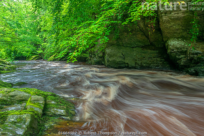 River flowing through woodland. Roe Valley Country Park, County Londonderry, Northern Ireland, UK. August 2020.  ,  Flowing,Flow,Europe,Western Europe,UK,Northern Ireland,Photographic Effect,Long Exposure,Flowing Water,River,Landscape,Freshwater,Water,Londonderry,  ,  Robert  Thompson