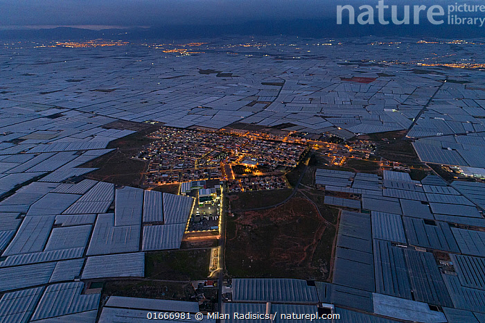 Aerial view of horticultural greenhouses for growing fruit and vegetables. The area is known as the �sea of plastic' and contains the largest concentration of greenhouses in the world, covering 26,000 hectares. Almeria, Spain. December 2019  ,  Group,Large Group,Pattern,Europe,Southern Europe,Spain,Aerial View,High Angle View,Plant,Crops,Produce,Cultivated,Food,Building,Greenhouse,Greenhouses,Agriculture,Horticulture,Interesting,Elevated view,Drone,Drone shot,  ,  Milan Radisics