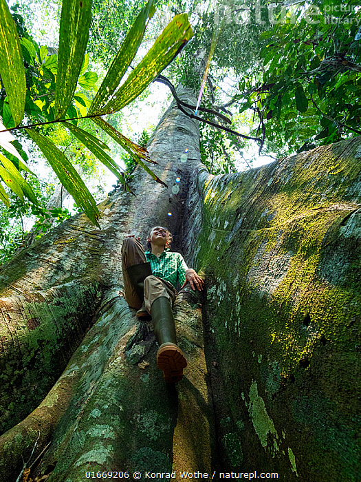 Young woman climbing large rainforest tree with buttress roots, Lowland Rainforest, Panguana Reserve, Huanuco province, Amazon basin, Peru. Model released.  ,  People,European Descent,Caucasian Ethnicity,Woman,Adventure,Spectacular,Healing,Heal,Health,Mood,Calm,Relaxation,Facial Expression,Smiling,Latin America,South America,Peru,Plant,Root,Tree,Tropical,Nature,Rainforest,Reserve,Forest,Protected area,Buttress Root,Amazon,Amazon Basin,Wellbeing,Forest Bathing,shinrin yoku,  ,  Konrad Wothe