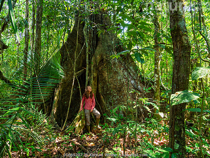 Young woman standing by large rainforest tree with buttress roots, Lowland Rainforest, Panguana Reserve, Huanuco province, Amazon basin, Peru. Model released.  ,  People,European Descent,Caucasian Ethnicity,Woman,Adventure,Spectacular,Healing,Heal,Health,Mood,Calm,Relaxation,Facial Expression,Smiling,Latin America,South America,Peru,Plant,Root,Tree,Tropical,Nature,Rainforest,Reserve,Forest,Protected area,Buttress Root,Amazon,Amazon Basin,Wellbeing,Forest Bathing,shinrin yoku,  ,  Konrad Wothe