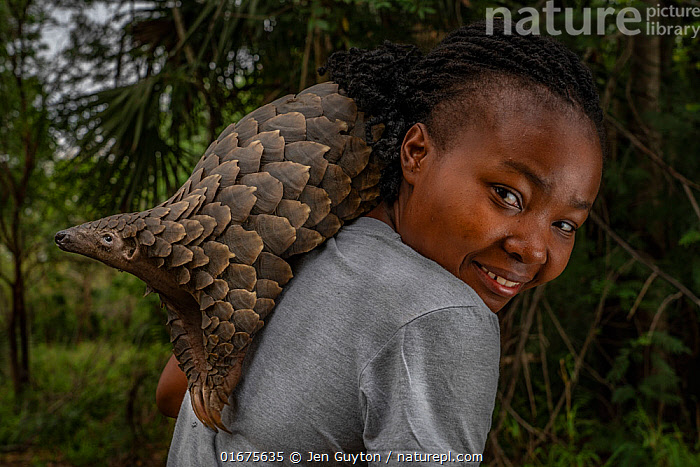 Mozambican wildlife veterinarian Mercia Angela  on her daily walk with Boogli, a female Cape pangolin  confiscated as  infant by Gorongosa's law enforcement team. Boogli's mother had already been sold.  Boogli was later released back into the wild. Gorogosa, Mozambique  ,  COP26,,Animal,Wildlife,Vertebrate,Mammal,Pangolin,Pangolins,Cape Pangolin,Animalia,Animal,Wildlife,Vertebrate,Mammalia,Mammal,Pholidota,Pangolin,Manidae,Pangolins,Scaly anteater,Trenggiling,Smutsia,Smutsia temminckii,Cape Pangolin,Ground Pangolin,Scaly Anteater,South African Pangolin,Temminck&#39,s Ground Pangolin,Manis temminckii,People,African Descent,Woman,Veterinary Surgeon,Africa,Southern Africa,Mozambique,Republic of Mozambique,Conservation,Animal rehabilitation,Rehabilitation,Wildlife conservation,Mozambican,,COP26  ,  Jen Guyton