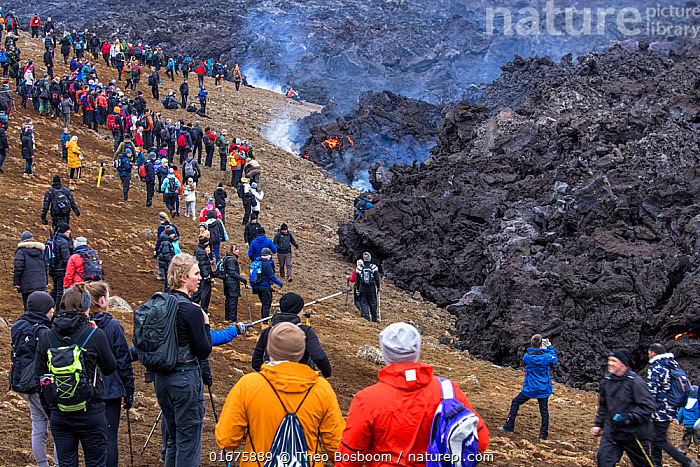 Large numbers of people, mainly from Iceland due to the Coronavirus pandemic, at the site of the eruption of the Fagradalsfjall volcano, Iceland, 2 April 2021.  The volcano has drawn an estimated number of 30.000 visitors since the start of the eruption at March 19. That equals almost 10% of the total population of Iceland.  ,  Iceland,,,Erupting,People,Group,Large Group,Europe,Northern Europe,North Europe,Nordic Countries,Scandinavia,Iceland,Volcano,Lava,Travel,Tourism,Geology,Volcanic features,Disease,Lava flow,Virus,Coronavirus,Covid-19,SARS-CoV-2,Covid19,  ,  Theo  Bosboom