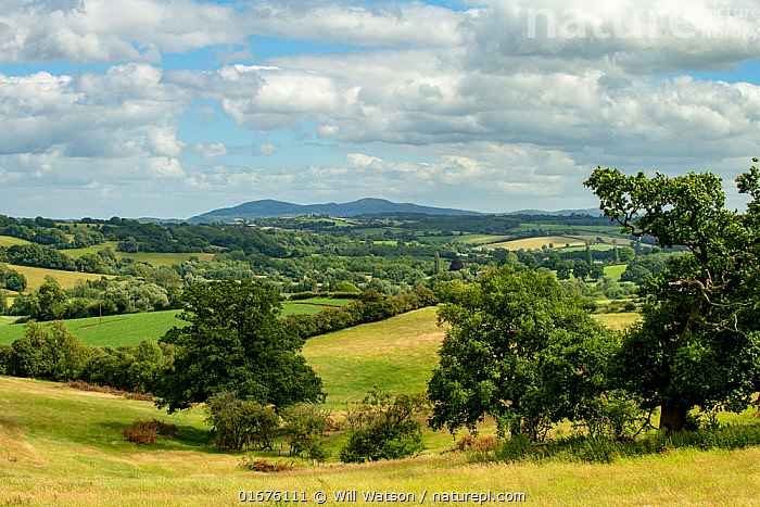 Malvern Hills SSSI and AONB viewed from Bromyard on the Herefordshire Plateau, England, UK. July.  ,  Europe,Western Europe,UK,Great Britain,England,Herefordshire,Landscape,Countryside,Reserve,Protected area,Identification,  ,  Will Watson