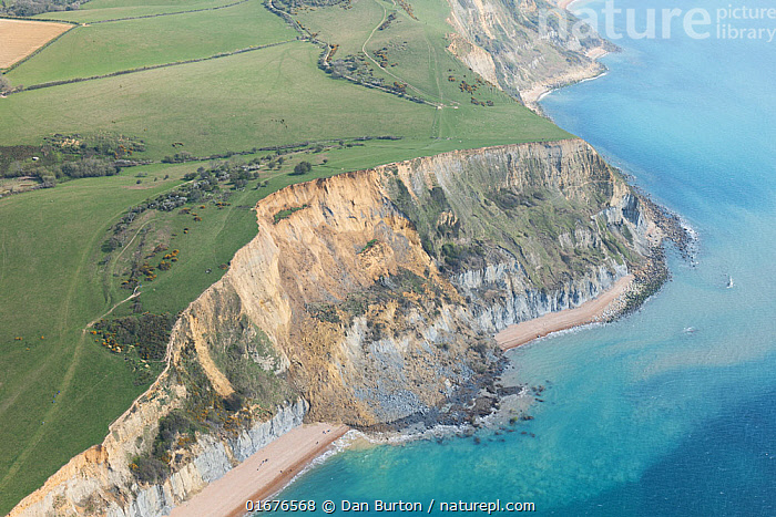 Sandstone cliff which collapsed on the 13th April 2021 between Seatown and Eype Beach in Dorset, UK. This was the largest such incident in the UK in the past 60 years. The cliff lost 300m of rock and sand and an estimated 4000 tonnes fell to the beach.  ,  Erosion,Europe,Western Europe,UK,Great Britain,England,Dorset,Aerial View,High Angle View,Cliff,Natural Disaster,Rock,Sandstone,English Channel,The English Channel,Marine,Water,Saltwater,Sea,Elevated view,Jurassic Coast,UNESCO World Heritage Site,Drone,Drone shot,  ,  Dan Burton