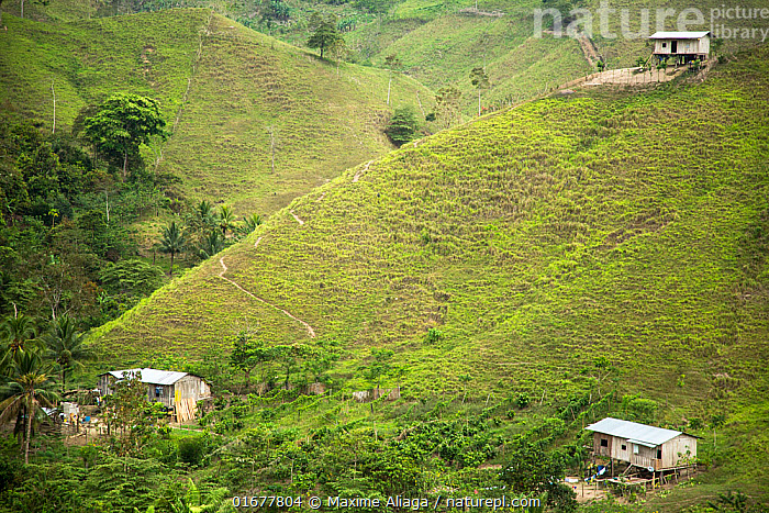 Mountain landscape with houses Mache Chindul Reserve Choco, Ecuador  ,  Traditional,Colour,Green,Latin America,South America,Ecuador,Building,Residential Structure,House,Houses,Agricultural Land,Cultivated Land,Field,Landscape,Farmland,  ,  Maxime Aliaga
