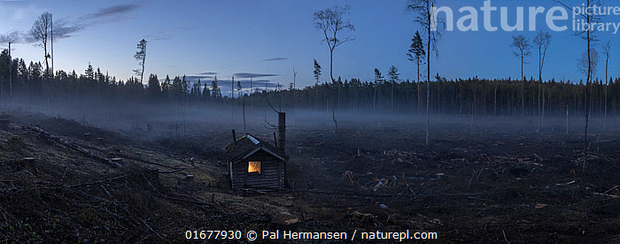 Cabin with lights on, in middle of clear-cut forest, Viken, Norway. 2021  ,  COP26,,,Europe,Northern Europe,North Europe,Nordic Countries,Scandinavia,Norway,Building,Hut,Huts,Night,Cabin,Cabins,Environment,Environmental Issues,Environmental Damage,Deforestation,Taiga,Boreal forest,Forest,  ,  Pal Hermansen