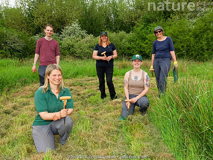 Ellie Jones of Wiltshire Wildlife Trust and a team of volunteers holding their dibbers after using them to dig holes for hundreds of Devil's bit scabious (Succisa pratensis) plant plugs in a formerly farmed meadow to provide food for caterpillars of the Marsh fritillary butterfly (Euphydryas aurinia), Upper Minety Meadows reserve, Wiltshire, UK, June. Model released  ,  Plant,Vascular plant,Flowering plant,Asterid,Teasel family,Devils bit scabious,Plantae,Plant,Tracheophyta,Vascular plant,Magnoliopsida,Flowering plant,Angiosperm,Spermatophyte,Spermatophytina,Angiospermae,Dipsacales,Asterid,Dicot,Dicotyledon,Asteranae,Dipsacaceae,Teasel family,Succisa,Succisa pratensis,Devils bit scabious,Devilsbit scabious,Scabiosa succisa,Scabiosa arvensis,Planting,People,European Descent,Caucasian Ethnicity,Woman,Man,Happiness,Group,Medium Group,Facial Expression,Smiling,Europe,Western Europe,UK,Great Britain,England,Wiltshire,Equipment,Gardening Equipment,Gardening Tools,Tool,Tools,Dibble,Dibbles,Summer,Grassland,Meadow,Reserve,Conservation,Volunteer,Volunteering,Volunteers,Protected area,Dibber,  ,  Nick Upton