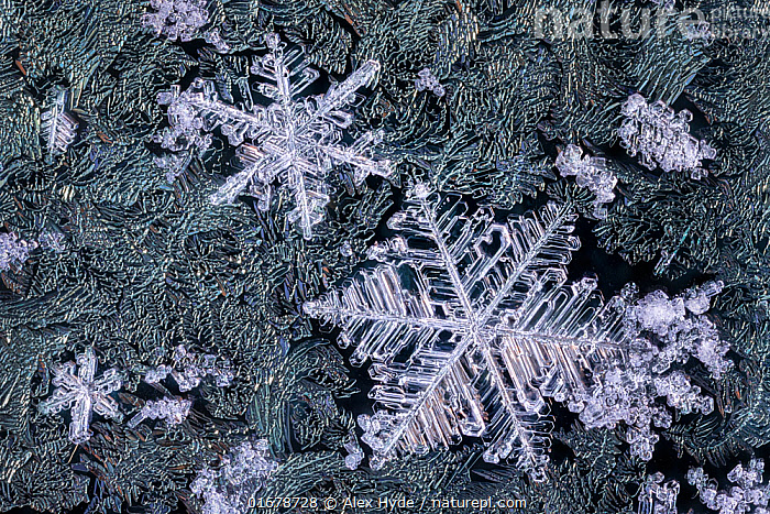 Close up of snowflakes surrounded by frost on a car window early in the morning. Peak District National Park, Derbyshire, UK. Febauary.  ,  Europe,Western Europe,UK,Great Britain,England,Derbyshire,Close Up,Snow,Snowflake,Snowflakes,Macros,  ,  Alex Hyde