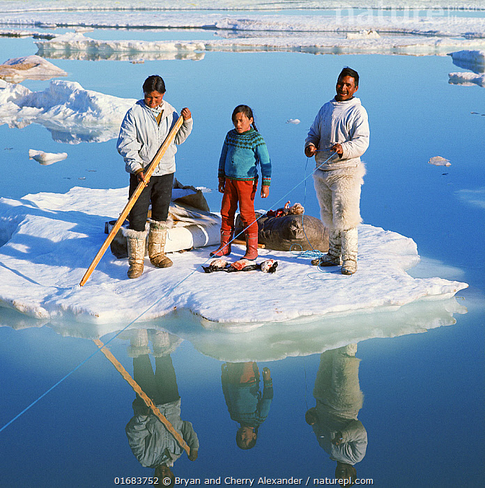 Orfik Duneq, his wife Judithe and daughter Jacobine using an ice floe as a raft to cross a wide lead in early summer. Qaanaaq. NW Greenland. (1971)  ,  People,Inuit,Eskimo,Eskimoes,Eskimos,Innuits,Inuits,Child,Woman,Man,Family,Parent,Mother,Father,Dad,Daddy,Dads,Fatherhood,Fathers,Traditional,Arctic,Polar,Clothing,Traditional Clothing,Boat,Raft,Floating Platform,Floating Platforms,Rafts,Reflection,Ice,Pack Ice,Snow,Culture,Indigenous Culture,Open boat,Bookplate,Tribes,Sea ice,Arctic people,Kalaallit Nunaat,Young,Young Person,  ,  Bryan and Cherry Alexander
