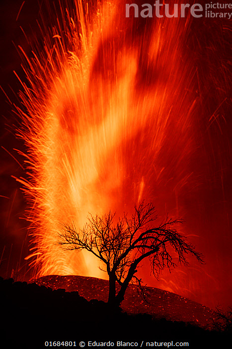 Volcanic eruption with silhouette of tree, Cumbre Vieja Volcano, La Palma, Canary Islands. September 2021  ,  Erupting,Vibrant Colour,Temperature,Hot,Europe,Southern Europe,Copy Space,Back Lit,Island,Islands,Volcano,Landscape,Night,Geology,Volcanic features,Silhouette,Atlantic Islands,Dramatic,Negative space,  ,  Eduardo Blanco