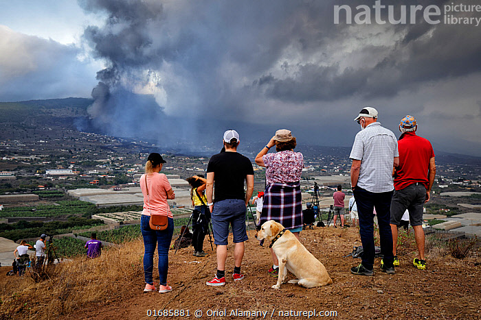 Residents of the Aridane valley watching eruption of Cumbre Vieja volcano near their homes, La Palma, Canary Islands, September 2021.  ,  Homes,Canis familiaris,Erupting,People,Damaged,Destruction,Europe,Southern Europe,Animal,Settlement,Village,Building,Ash,Ashes,Island,Islands,Volcano,Smoke,Landscape,Domestic animal,Pet,Geology,Volcanic features,Atlantic Islands,Mediterranean Basin,Mediterranean,Biodiversity hotspot,Domestic Dog,Domesticated,Phenomenon,Homes,Canis familiaris,Dog,Volcanic Ash,Mammal,Natural Phenomenon,  ,  Oriol  Alamany