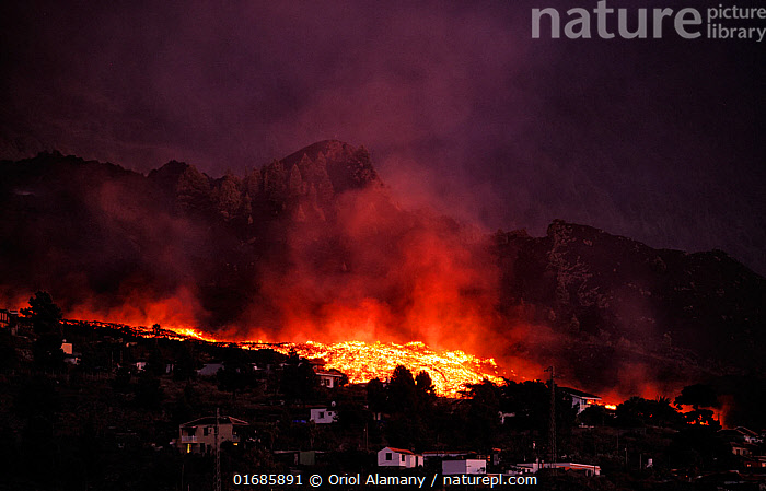 Cumbre Vieja volcano erupting at night, with lava flow destroying houses in El Paso village, La Palma, Canary Islands. September 2021.  ,  Erupting,Danger,Threatening,Destruction,Temperature,Hot,Europe,Southern Europe,Settlement,Village,Building,Residential Structure,House,Houses,Island,Islands,Volcano,Lava,Night,Geology,Volcanic features,Atlantic Islands,Mediterranean Basin,Mediterranean,Biodiversity hotspot,Phenomenon,Natural Phenomenon,Lava flow,  ,  Oriol  Alamany