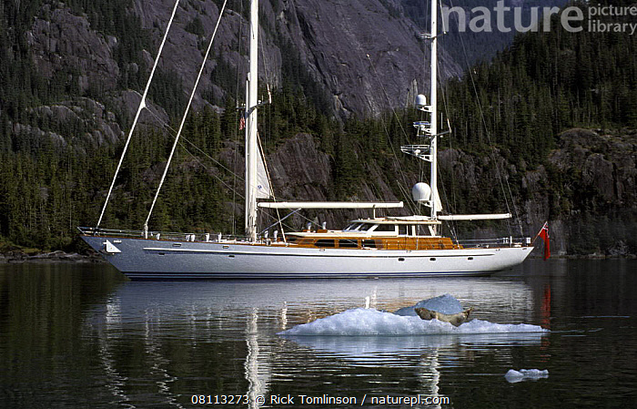 """118ft S&S designed superyacht, """"Timoneer"""", passes by a seal on an iceberg in Fords Terror, Tongass National Forest, south-east Alaska.  ,  ALASKA,COASTS,CRUISING,FJORD,FJORDS,FORESTS,ICE,ICEBERGS,KETCHES,PROFILE,SAILING BOATS,SEALS,SUPERYACHTS,USA,YACHTS,BOATS, SAILING-BOATS ,North America, SAILING-BOATS , SAILING-BOATS  ,  Rick Tomlinson"""