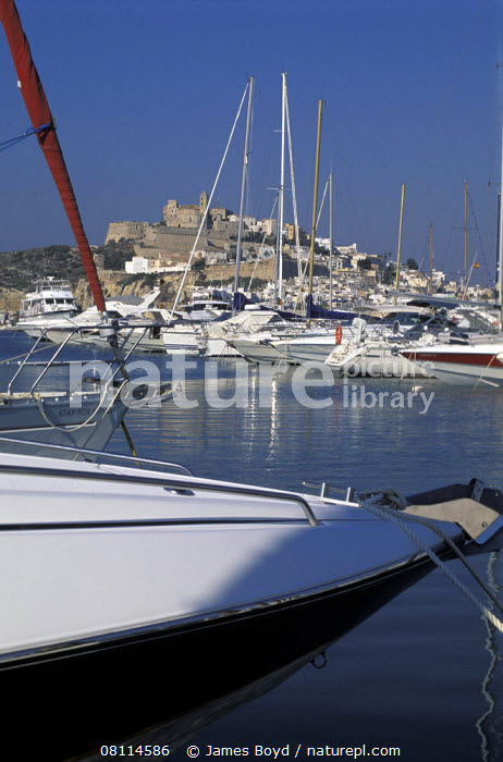Large powerboats moored in the marina at Ibiza town with the old town in the backround, Ibiza  ,  VERTICAL,BALEARIC ISLANDS,BOATS,BOWS,COASTS,EUROPE,HARBOURS,MEDITERRANEAN,MOORED,SPAIN,TEMPERATE,TOWNS  ,  James Boyd