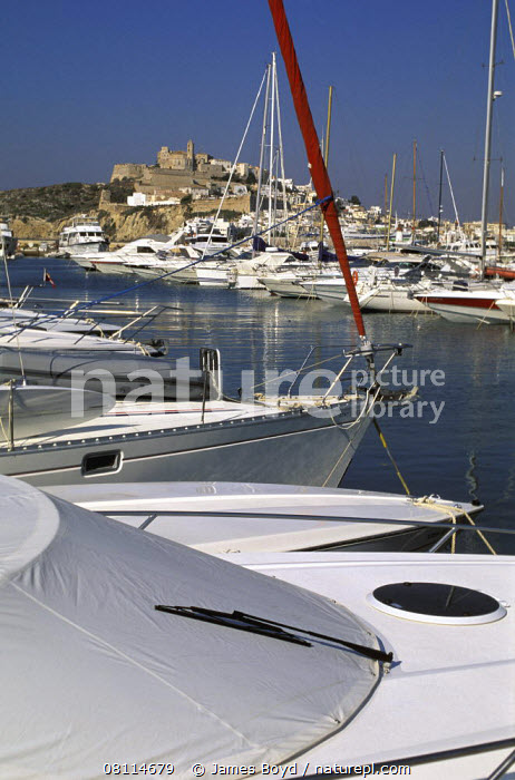 Large powerboats moored in the marina at Ibiza town with the old town in the backround, Ibiza  ,  VERTICAL,BOATS,BOWS,EUROPE,MARINAS,MEDITERRANEAN,MIXED BOATS,MOTORBOATS,SAILING BOATS,TEMPERATE,TOWNS,YACHTS  ,  James Boyd