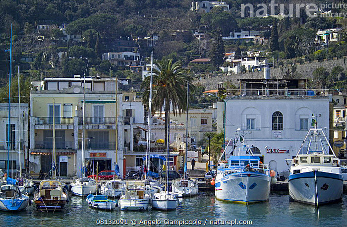 Yachts and motor boats moored in the harbour of Ischia's Porto Town. Bay of Naples, Italy.  ,  BOATS,BUILDINGS,COASTS,EUROPE,HARBOURS,ITALY,MEDITERRANEAN,MIXED BOATS,MOORED,MOTORBOATS,SAILING BOATS,TOWNS,YACHTS  ,  Angelo Giampiccolo