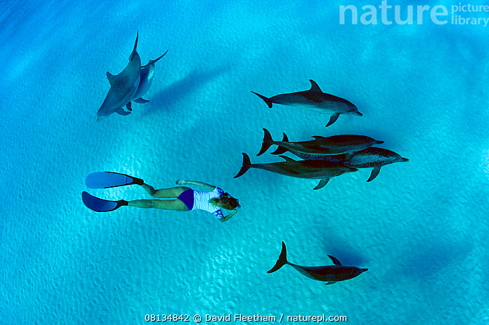 Freediver swimming with Atlantic bottlenose dolphins (Tursiops truncatus) and Atlantic spotted dolphins (Stenella frontalis / plagiodon), Bahamas Bank, Caribbean.  ,  MARINE,ATLANTIC,BLUE,CARIBBEAN,Discovery,GROUPS,HIGH ANGLE SHOT,HOLIDAYS,INTERACTION,LIFESTYLE,MIXED SPECIES,PEOPLE,SNORKELING,the bahamas ,TROPICAL,UNDERWATER,WEST INDIES,WOMAN,Concepts,Dolphins,Cetaceans,Mammals,,Journeyman,Travel,Wanderlust,  ,  David Fleetham