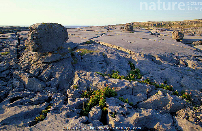 Limestone pavement, The Burren, County Clare,  Republic of Ireland  ,  RESERVE,LANDSCAPES,EUROPE,ROCK FORMATIONS,Geology,  ,  Tim Edwards