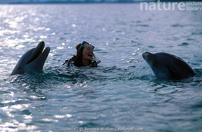 Charlotte Uhlenbroek swimming with Bottlenosed dophins  ,  NOSED,BOTTLENOSE,CETACEANS,MAMMALS,BOTTLE,PEOPLE  ,  Bernard Walton