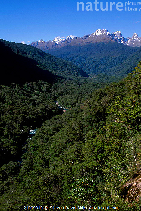 Lookout from on-high of Milford Road (into Milford Sound) Fjordland NP South Is NZ, LANDSCAPES,ALPS,RESERVE,NEW ZEALAND,RIVERS,MOUNTAINS,SOUND,NATIONAL,FIORDLAND,PARK,HIGHLANDS, Steven David Miller