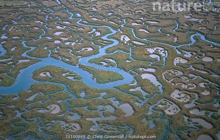 Aerial view of saltmarsh Abbotts hall reserve Essex UK intertidal zone, LANDSCAPES,SITE,COASTS,MANAGED,LITTORAL,COAST,ESTUARY,SEA,SALTMARSHES,RETREAT,EUROPE,LANDSCAPES,INTERTIDAL ,AERIALS,ENGLAND, Chris Gomersall