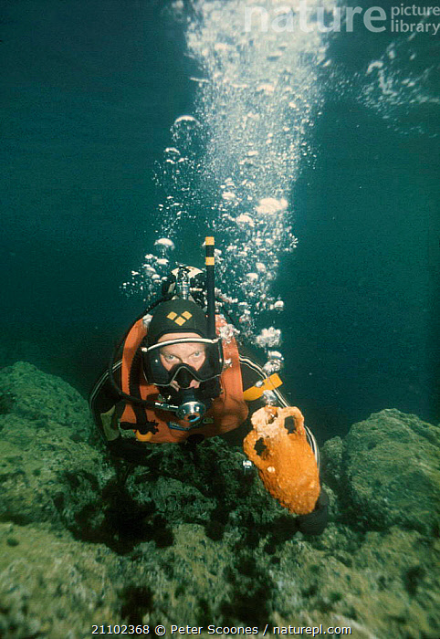 Diver carrying amphora up from seabed. Mediterranean, TEMPERATE,WATER PURSUITS,PEOPLE,POTTERY,ARTIFACTS,EUROPE,UNDERWATER, PETER SCOONES