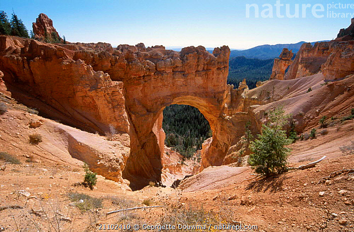 Natural bridge Bryce Canyon NP Utah USA. sandstone erosion, RESERVE,LANDSCAPES,ROCK FORMATIONS,ARCH,HOODOOS,NORTH AMERICA,DESERTS,GEOLOGY,USA, Georgette Douwma