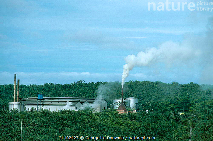 Pollution from Oil palm factory in plantation. Sabah Malaysia Indonesia. Smoke pollutes large, TREES,AGRICULTURE,REPLACE,BUILDINGS,DAMAGE,DEFORESTATION,RAINFOREST,CROPS,SOUTH EAST ASIA,PLANTATIONS,PLANTATION,ASIA,INDONESIA,LANDSCAPES,TROPICAL RAINFOREST,ENVIRONMENTAL,AREAS,PLANTS,SOUTH-EAST-ASIA, Georgette Douwma