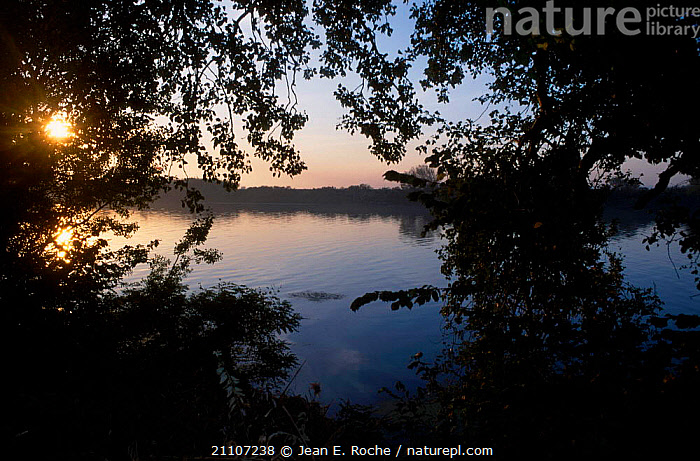 Alluvial forest on banks of the Rhone Camargue France  ,  ATMOSPHERIC,RIVERS,LANDSCAPES,WOODLANDS,Europe  ,  Jean E. Roche
