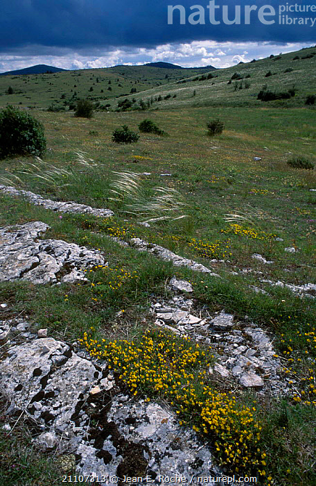 Eroded rocks on exposed hillside Causses Tarn France  ,  WIND,ROCK FORMATIONS,EROSION,FORMATIONS,LANDSCAPES,WEATHER,GEOLOGY,Europe  ,  Jean E. Roche