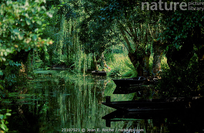 Boats moored along canal under willow trees. Marais poitevin France  ,  LANDSCAPES,TREES,PEACEFUL,SHADE,CONCEPTS,PLANTS,Europe  ,  Jean E. Roche