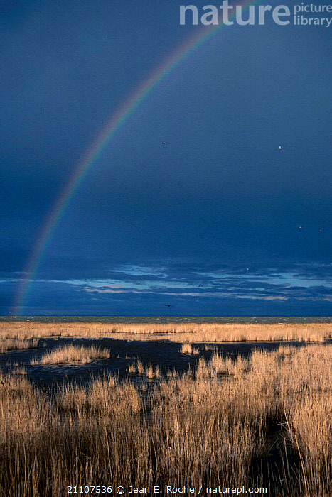 Rainbow over the Camargue France  ,  RAINBOWS,REEDS,SALTMARSHES,LANDSCAPES,WETLANDS,COASTS,WEATHER,Europe  ,  Jean E. Roche