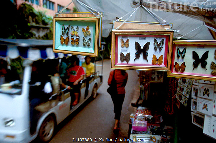 Street scene with framed butterflies for sale. Yunnan China. 2002  ,  ROADS,TRADE,INSECTS,ROADS,ASIA,SALE,LANDSCAPES,LEPIDOPTERA,MARKET,STREETS,ANIMALS IN ART,INSECT,INVERTEBRATES,CHINA  ,  Xu Jian