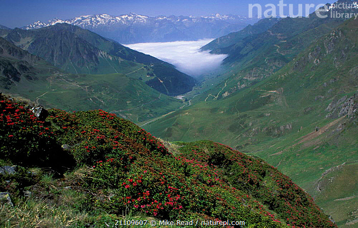 View from Col de Tourmalet with clouds in valley below Pyrenees France  ,  LANDSCAPES,HIGHLANDS,FLOWERS,Europe  ,  Mike Read