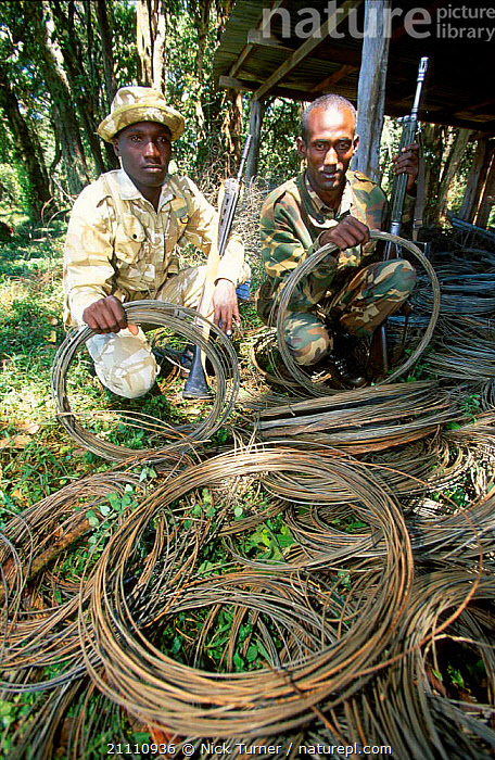 Kenyan Wildlife Service rangers with poachers snares Mt Elgon NP Kenya. 2002  ,  MOUNT,SNARE,PEOPLE,RESERVE,AFRICA,POACHING,TWO,ILLEGAL,EAST-AFRICA  ,  Nick Turner