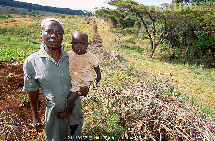 Acacia fence built to protect crops from wild animals of Mt Elgon NP Kenya  ,  FARMERS,AFRICA,PEOPLE,RESERVE,FARMLAND,LANDSCAPES,BORDER,AGRICULTURE,MOUNT,EAST-AFRICA  ,  Nick Turner