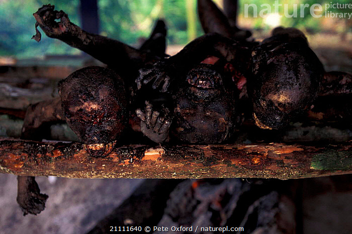 Dead Moustached monkey {Cercopithecus cephus} hung up by tail for bushmeat. Gabon  ,  MONKEYS,BUSHMEAT,PRIMATES,SOUTH AMERICA,COOKING,PRIMATES,LANDSCAPES,TRADITIONAL,AMAZONIA,FIRE,FOOD,GUENON,MAMMALS,ROASTING,SOUTH-AMERICA  ,  Pete Oxford