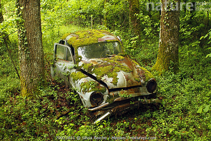 Wreck of Simca Aronde car in forest, Saint-Jory-las-Bloux, Dordogne, France  ,  Abandoned, Car, Color Image, Day, Dordogne, Forest, France, Garbage, Horizontal, Interior, Moss, Nobody, Old, One Object, Outdoors, Photography, Pollution, Saint-Jory-las-Bloux, Trash, Vegetation, Vehicle,France  ,  Silvia Reiche