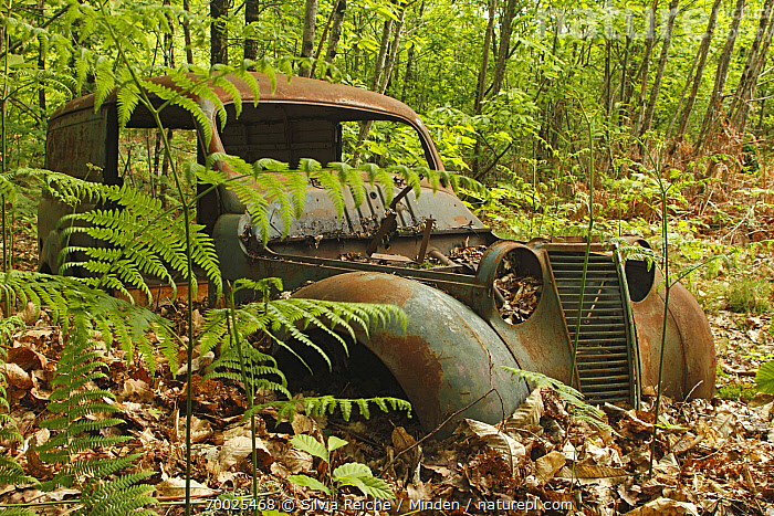 Renault Juvaquatre car wreck in forest, Saint-Jory-las-Bloux, Dordogne, France  ,  Abandoned, Buried, Car, Color Image, Day, Dordogne, Forest, Horizontal, Leaf Litter, Nobody, One Object, Outdoors, Photography, Rust, Saint-Jory-las-Bloux, Truck, Wreck,France  ,  Silvia Reiche
