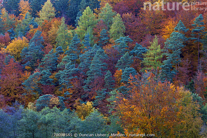 Autumn forest  ,  Autumn Color, Color Image, Day, Forest, Habitat, Horizontal, Nobody, Outdoors, Photography  ,  Duncan Usher