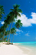 Beach and palm trees on Laccadive Islands, Indian Ocean - sky, sea and empty beach