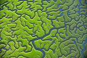 Aerial view of marshes with Seaweed exposed at low tide, Bah�a de C�diz Natural Park, C�diz, Andalusia, Spain, March 2008. WWE INDOOR EXHIBITION. UNAVAILABLE FOR COMMERCIAL USE WITHOUT PRIOR CONSENT  -  Wild Wonders of Europe / López
