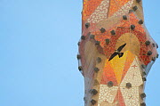Peregrine falcon (Falco peregrinus) flying past a spire of the Sagrada Familia Cathedral, designed by Gaudi,  Barcelona, Spain, April - Wild  Wonders of Europe / Geslin