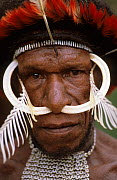 Head portrait of Dani man with head-dress and nose adornment made of bone, Baliem valley, West Papua, former Irian-Jaya, Indonesia, August 2002  -  Eric Baccega