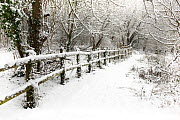 Footpath with fencing alongside woodland, after recent snowfall, Winter, UK, January 2010 - Neil Lucas