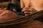 Huaorani Indian woman with her pet White-bellied Spider Monkey (Ateles belzebuth). They would have hunted the mother for meat and raised the baby as their pet. Gabaro Community, Yasuni National Park,...  -  Pete Oxford