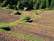 Aerial view of rice paddy fields (Oryza sativa) fixed-point observation of seasonal changes, ploughed fields in early winter, Shiga, Japan, November, sequence 7/8 - Nature Production
