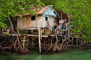 A thatched house built in amongst the mangrove roots on stilts. Northern Palawan, Philippines, May 2009. - Jurgen Freund